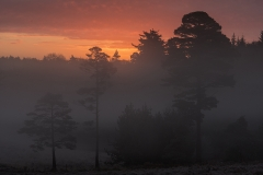 New Forest, A Misty sunrise on the coldest day of 2014